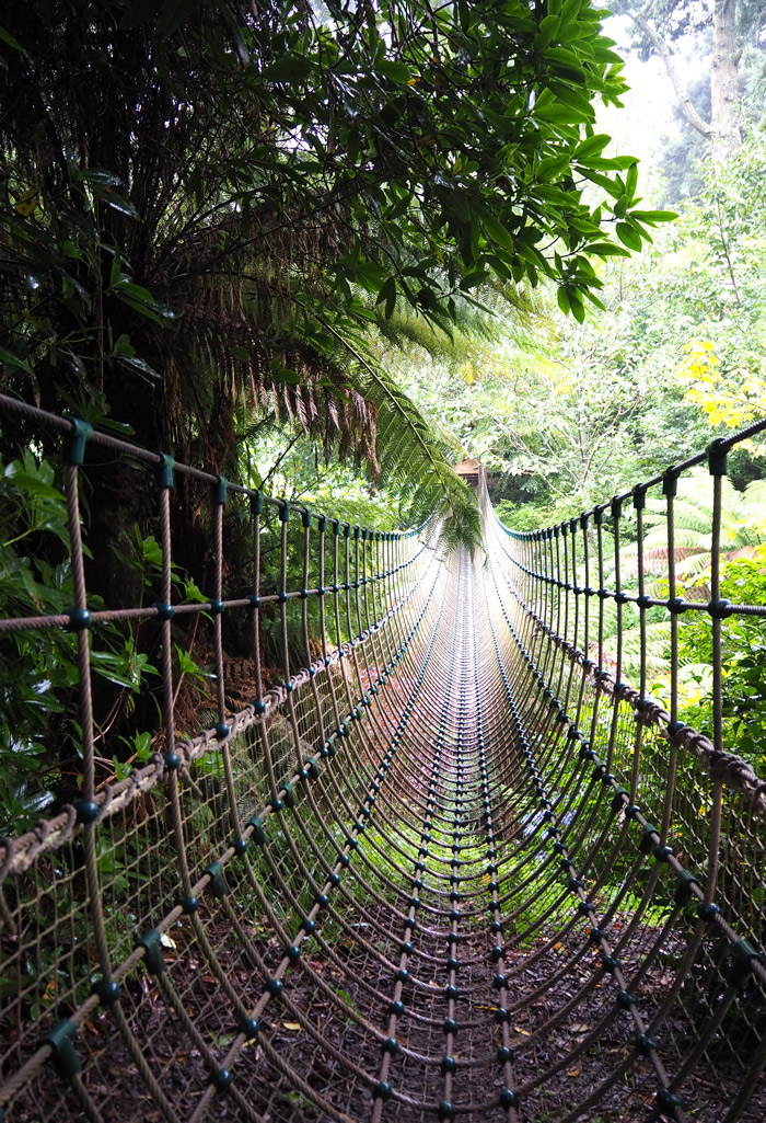 Burma rope bridge Heligan jardins
