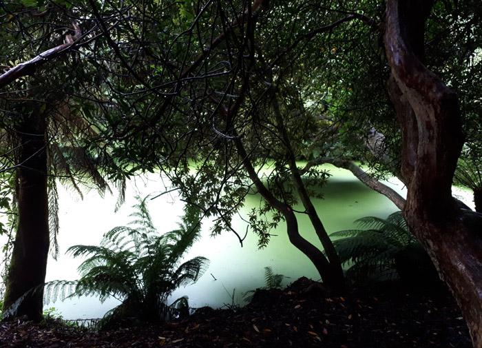 Jungle gardens Heligan