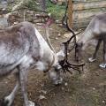 finlande rennes