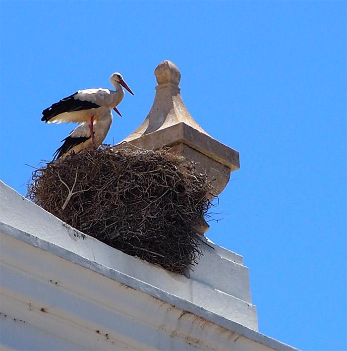 cigognes Portugal nid