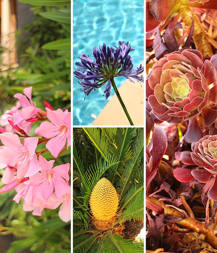 jardin fleurs bailli suffren rayol canadel