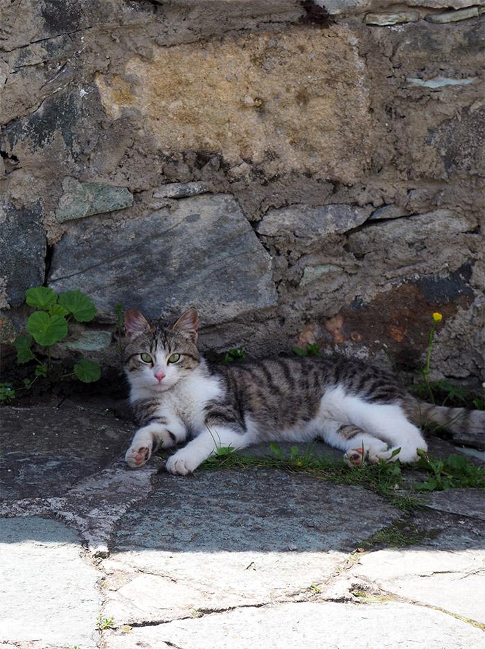 chat Arménie Tavush