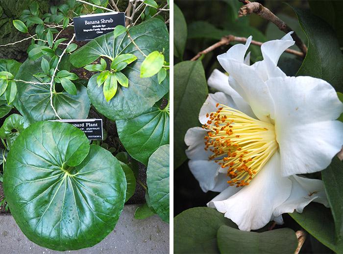 brooklyn jardin botanique