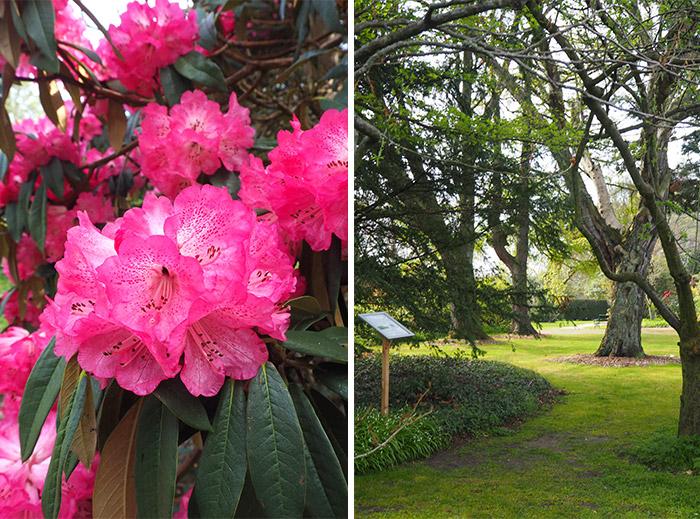 Cruickshank Aberdeen jardin botanique