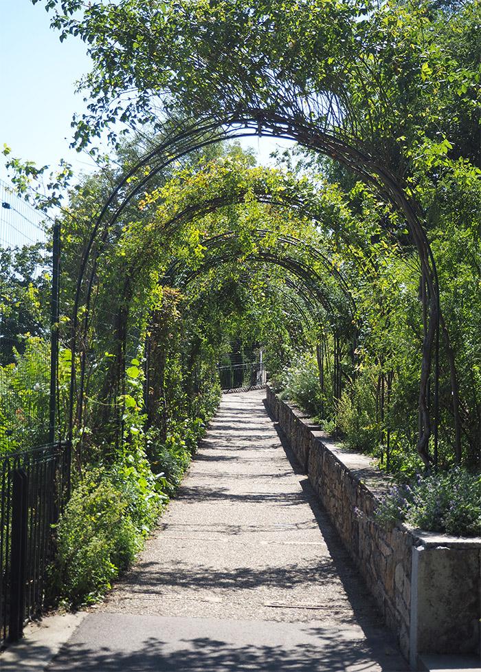 roseraie lyon fourviere jardin