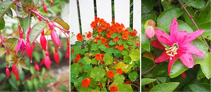 fleurs ile brehat