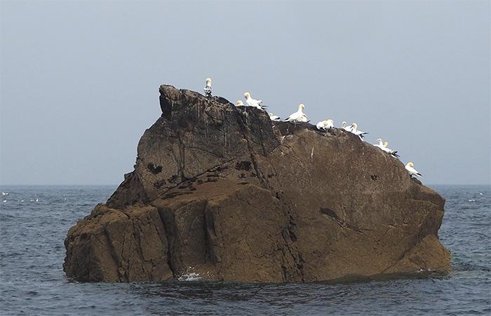 archipel sept iles reserve naturelle osiseaux
