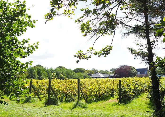la mare wine estate grape