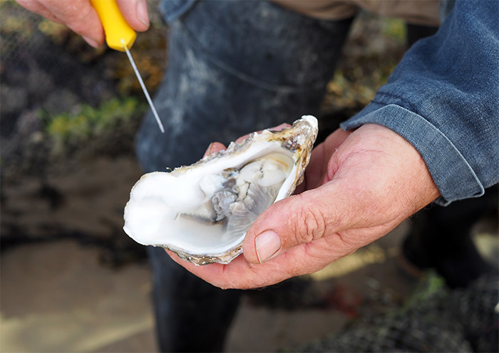 champagne et oysters tour jersey huitres