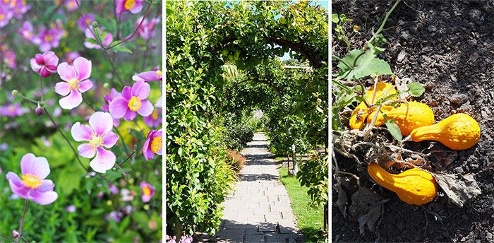 jardin botanique fleurs jersey samares