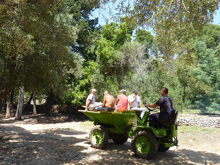 oliveraie lokrum croatie