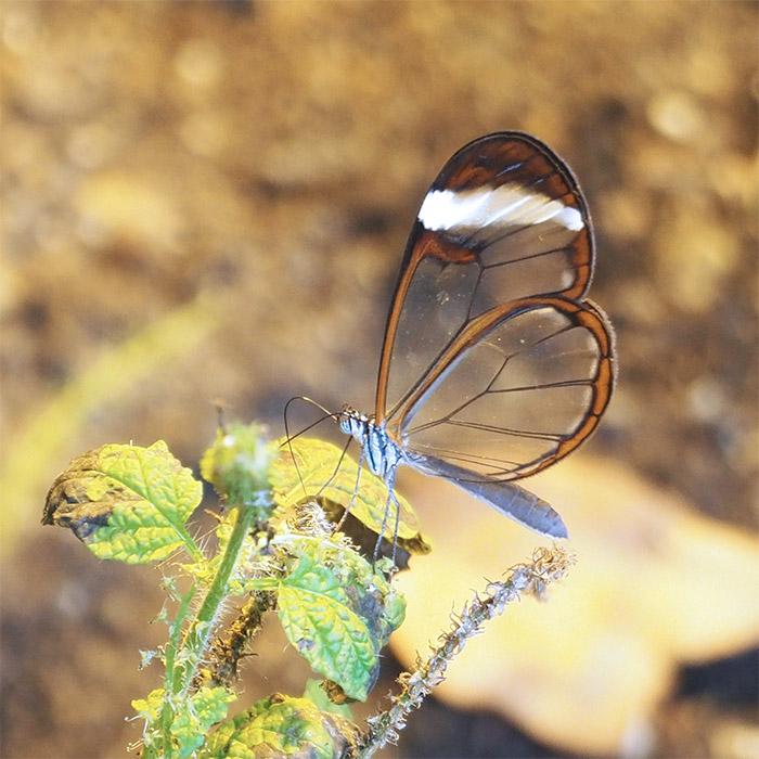 papillon serre tropicale aarhus danemark
