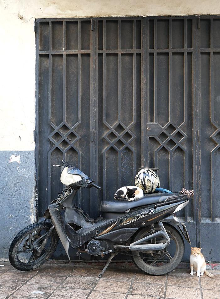 maroc tanger moto chats
