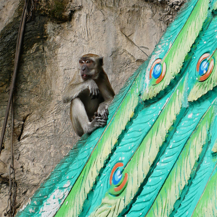 Singe Batu Grottes Hindou Malaisie