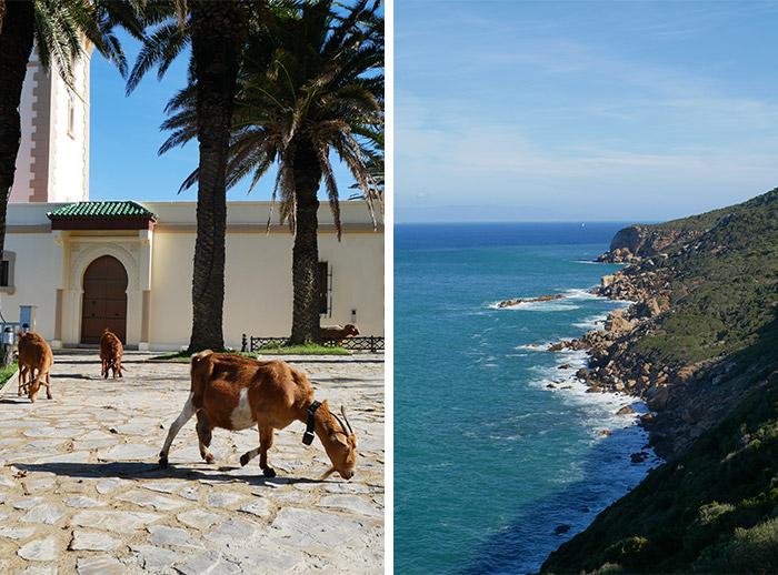 Maroc Cap Spartel chèvre