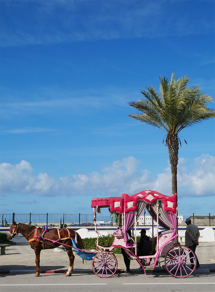 Maroc Asilah calèche cheval