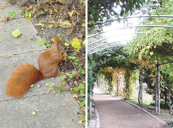 jardin botanique copenhague danemark