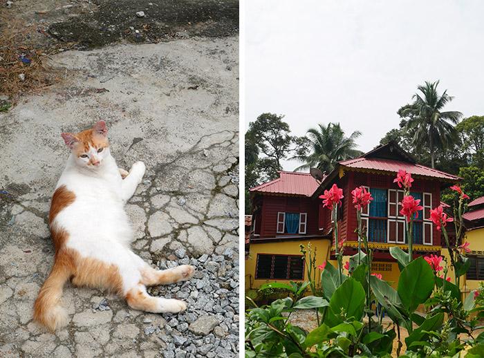malaisie labu kubong homestay