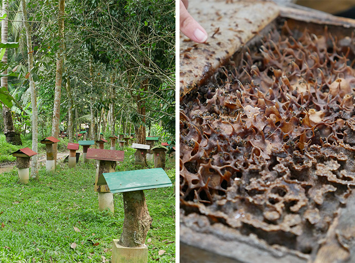 perak abeilles homestay labu kubong