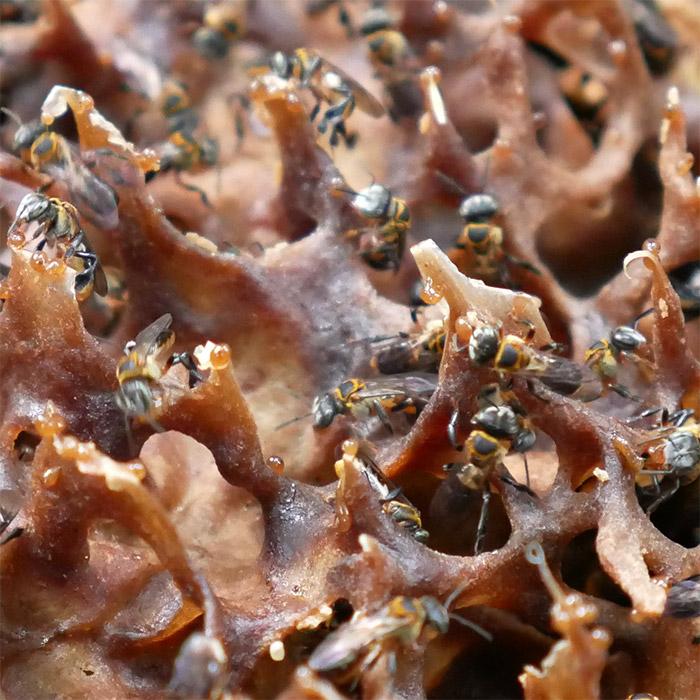perak abeilles homestay malaisie