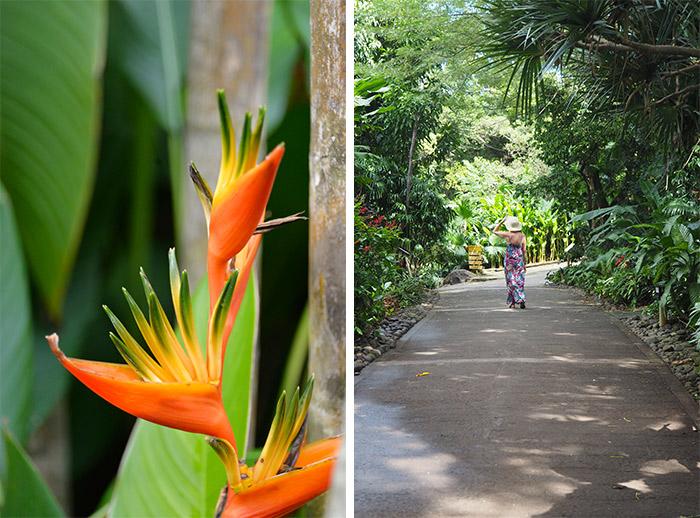 jardin deshaies guadeloupe