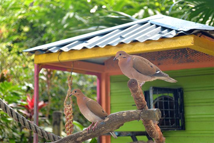guadeloupe jardin deshaies oiseaux