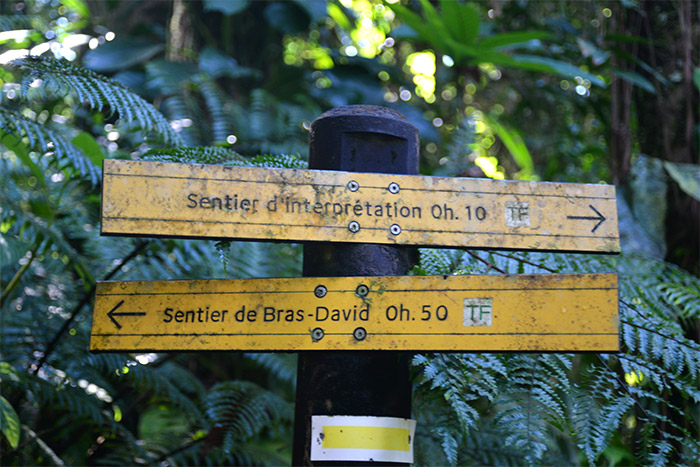 guadeloupe sentier interpretation foret