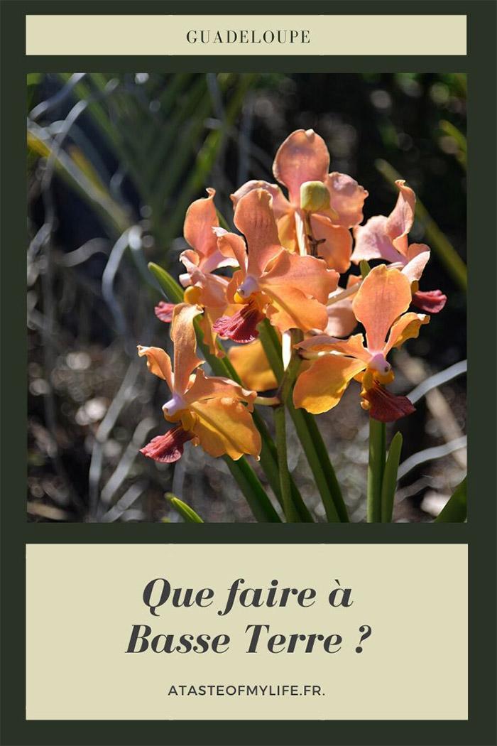 orchidee jardin deshaies guadeloupe
