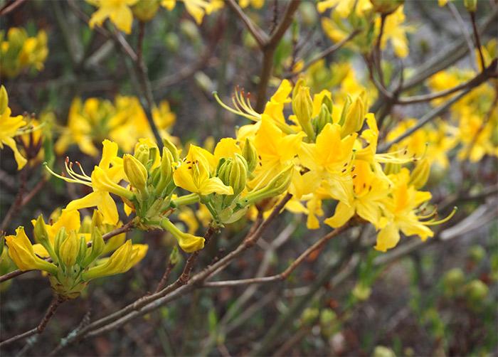 edimbourg jardin botanique ecosse