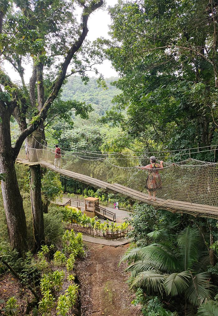 pont canopee jardin balata martinique