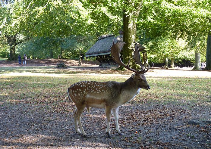 aarhus danemark parc rennes